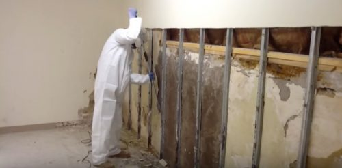 mold removal certification Phoenix